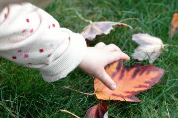 Collect colourful fall leaves and make a collage