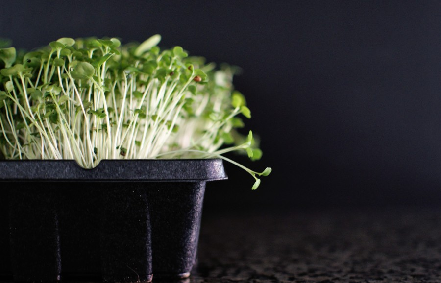 Microgreens: Salads and SWATteams